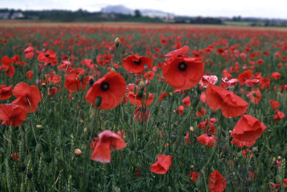 Remembrance Day Virtual School Meanderings
